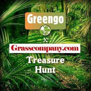 "Our friends over at @Grasscompany_com are having a ""Greengo Treasure Hunt"" leading up to their Black Friday Sale. Visit their special Black Friday webpage to see how you can hunt for some extra discount!"